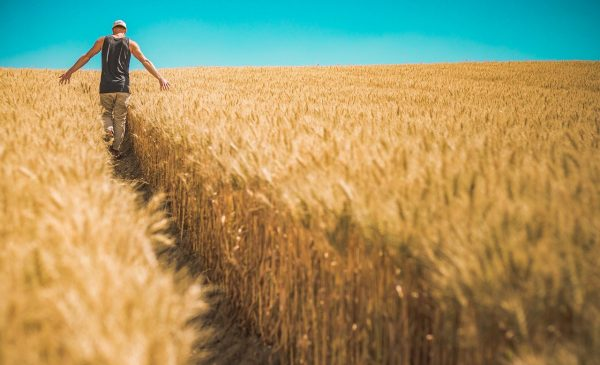 man walking through grain field